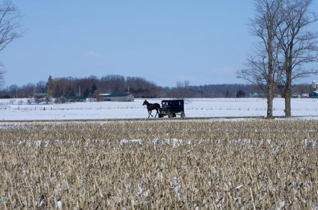 Mennonite horse and buggy on a snowy winter