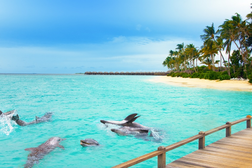 Dolphins at ocean in Maldives