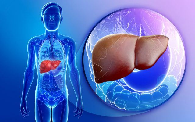 illustration showing male liver anatomy