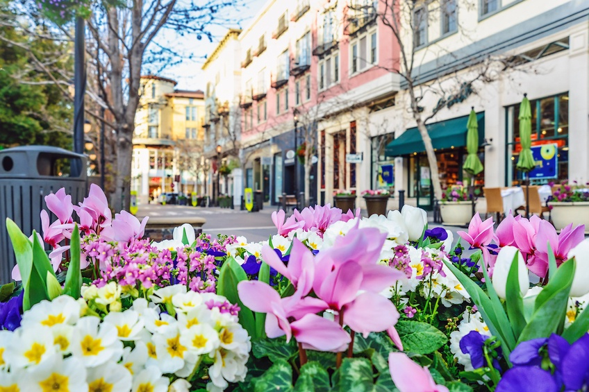 flowers on street in downtown san jose