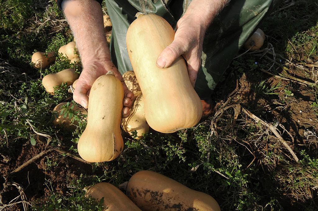 A farmer shows off his butternut squash