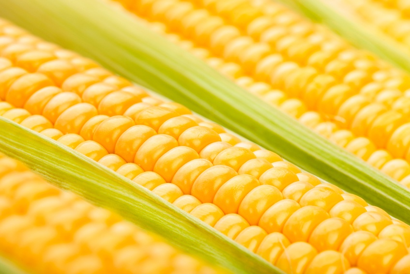 close up of corn