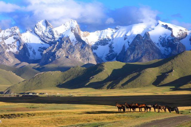 horse and mountains in Kyrgyzstan