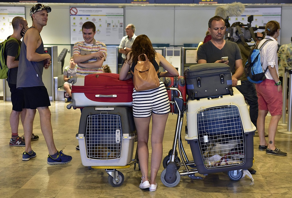pets in kennels for the airport