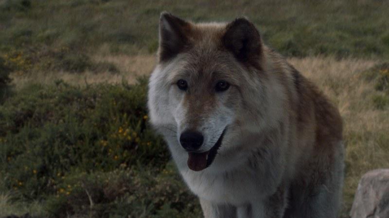 Bran Stark's direwolf