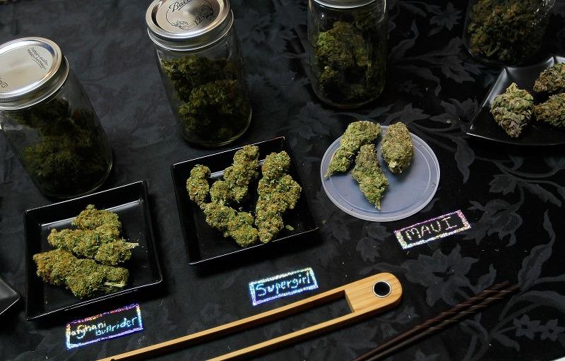 An array of marijuana samples are seen on a table