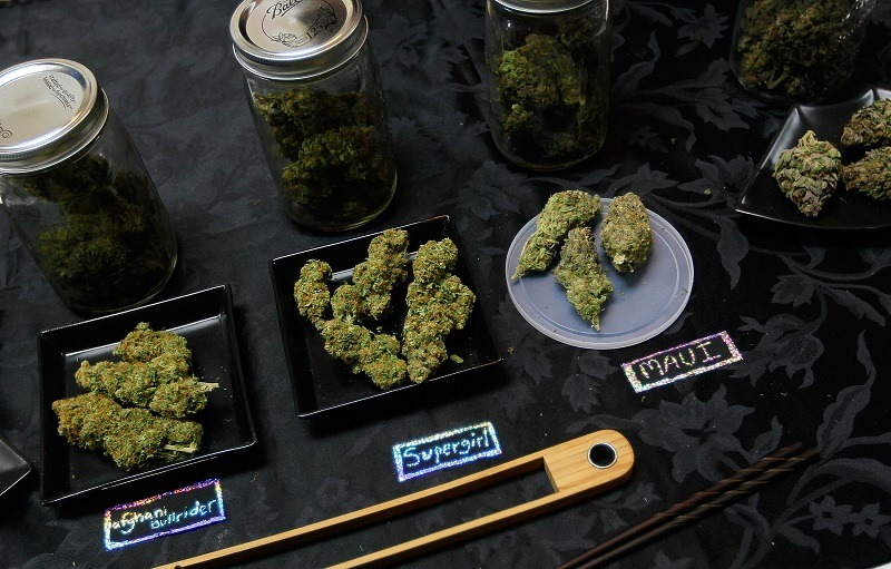 An array of marijuana samples are seen on a table, some containing high THC and CBD levels
