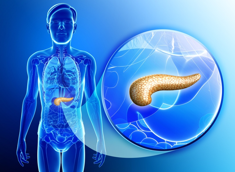 Illustration of male pancreas anatomy