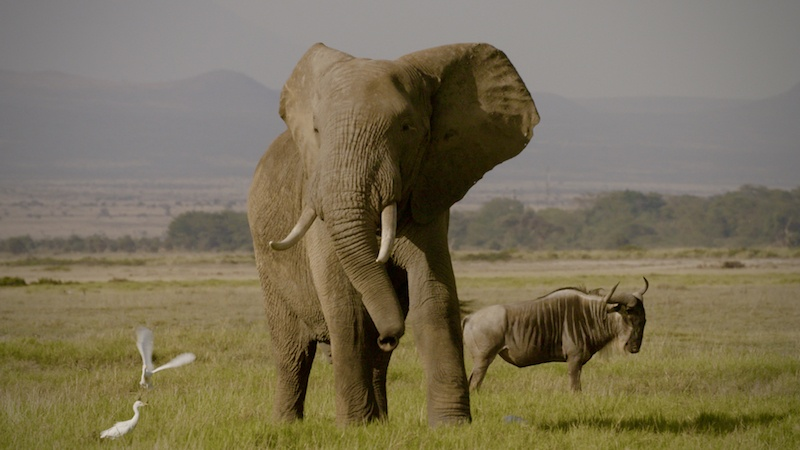 The Ivory Game | Netflix
