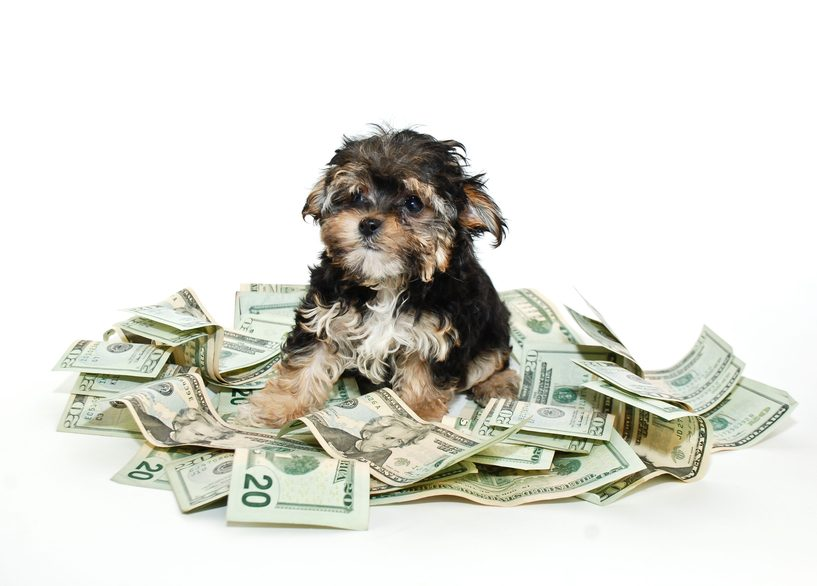 puppy sitting in a pile of money