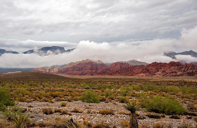 Red Rock Canyon Conservation Area