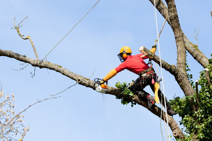 Man on tree with chainsaw