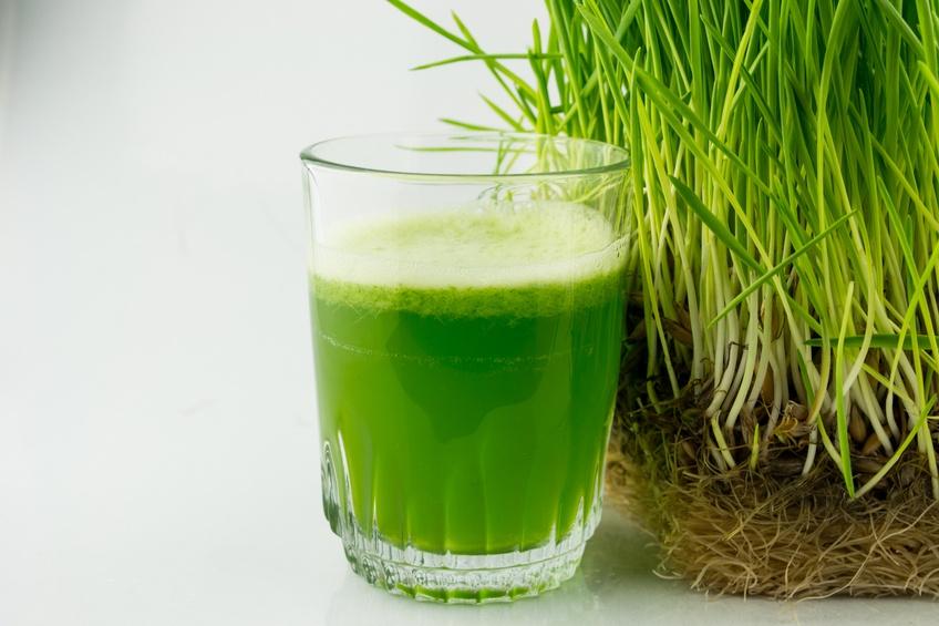 Green Organic Wheat Grass Juice