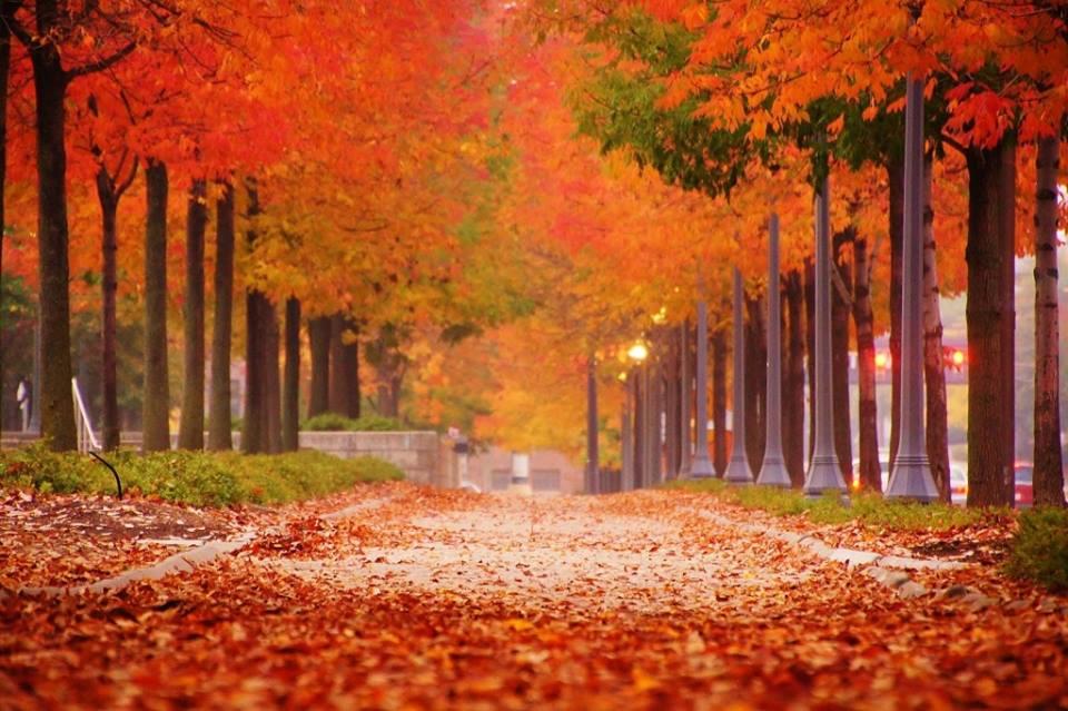 Fall in Fort Wayne, Indiana