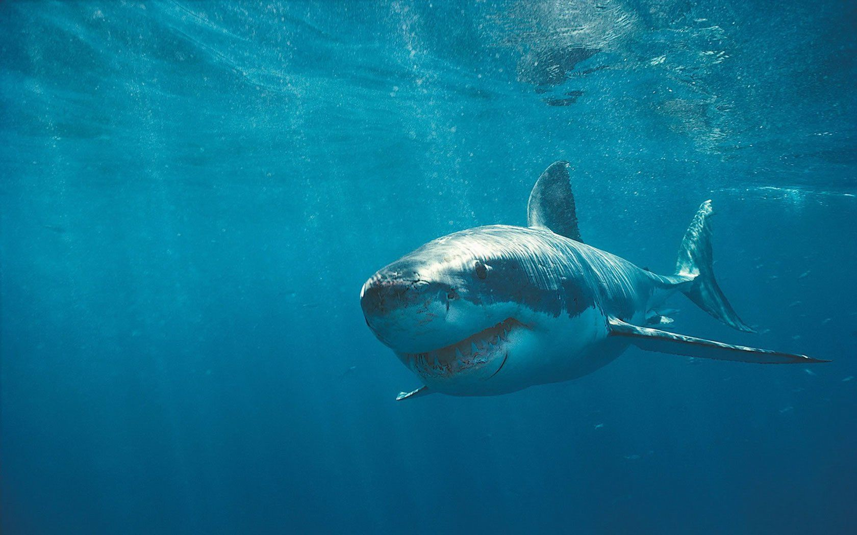 'Shark Attack 3: Megalodon'   Nu Image Films