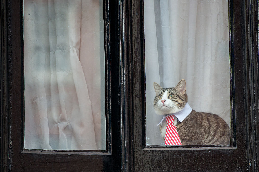 a cat wearing a striped tie