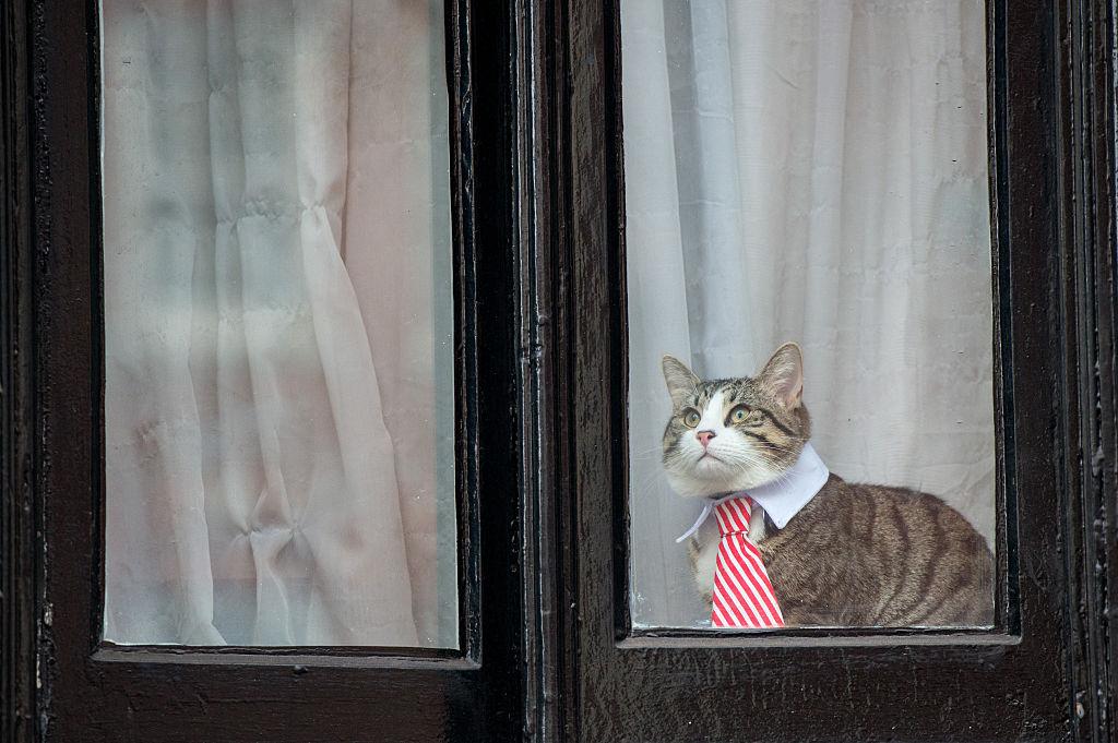 a cat wearing a striped tie