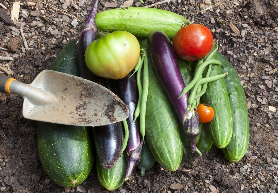 freshly picked homegrown garden vegetables