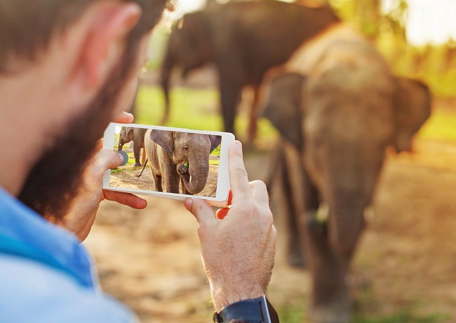 man photographing baby elephant