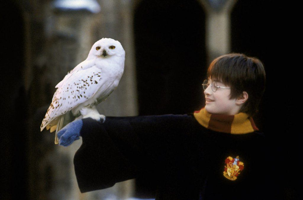 Harry Potter in his robes holding out his arm with his snowy owl, Hedwig, perched there