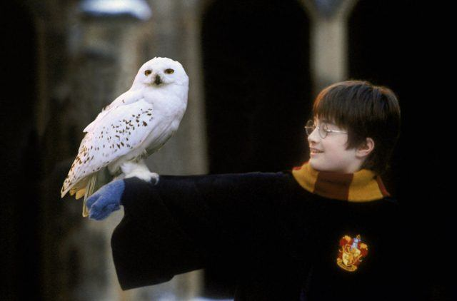 Harry Potter (Danielle Radcliffe) holds out his arm for Hedwig the owl to perch on in 'Harry Potter and the Sorcerer's Stone'