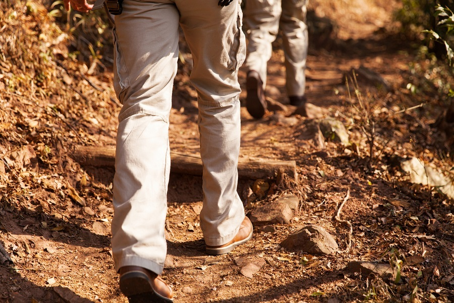 hikers walking in forest