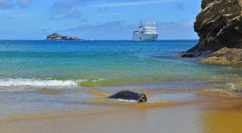 A sea lion rests on the seashore on Española Island in the Galápagos Islands