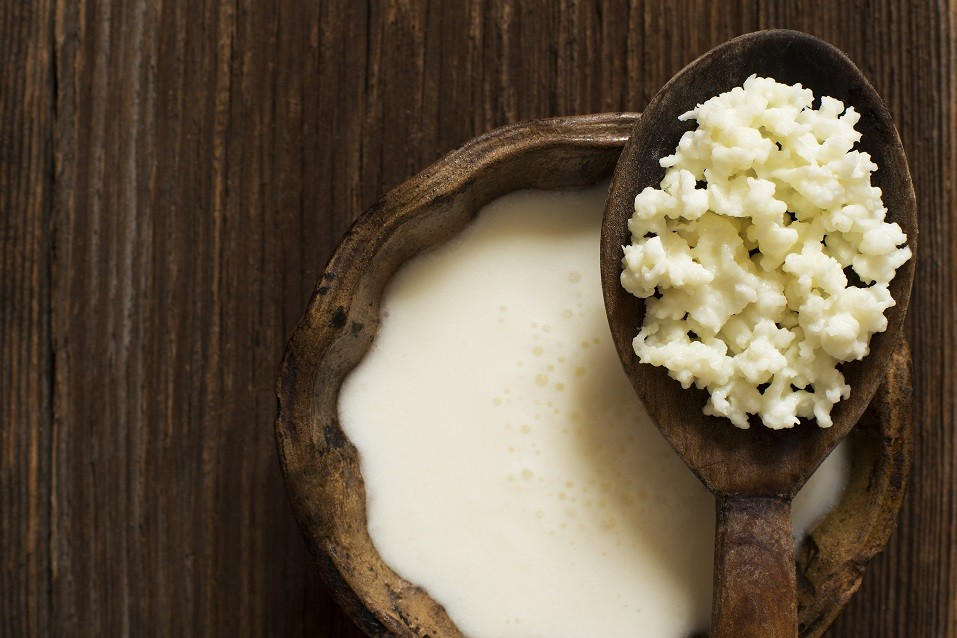 Milk kefir grains on a wooden spoon