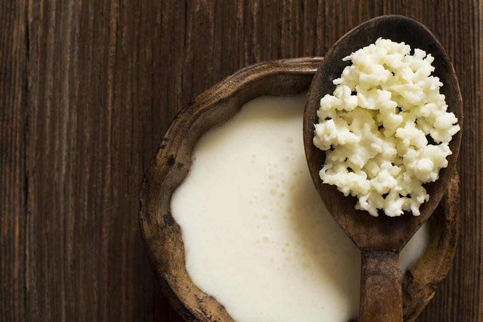 Milk kefir grains on a wooden spoon