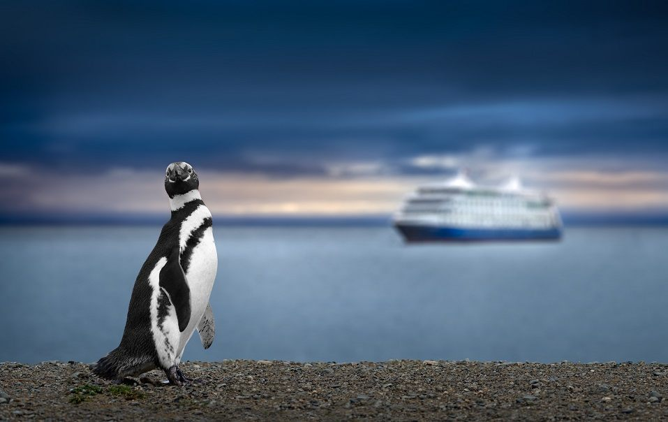 A cruise ship floats offshore from a penguin in Patagonia