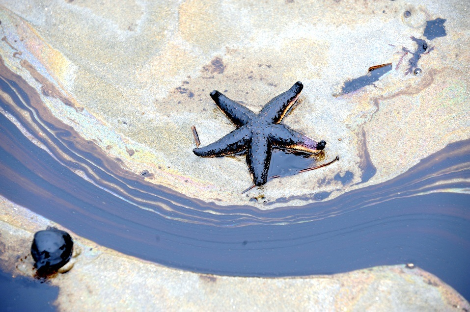 A sea is polluted with oil