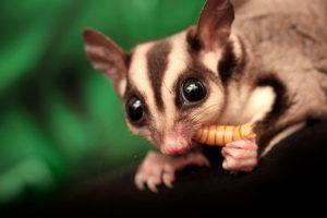 12 Most Exotic Animals for Sale in the United States