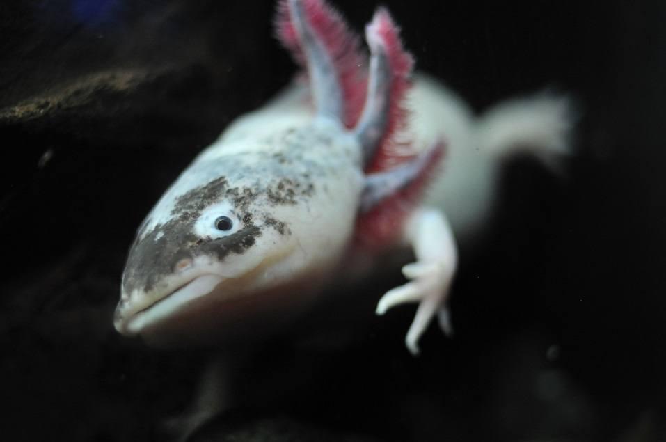 salamander from drakness