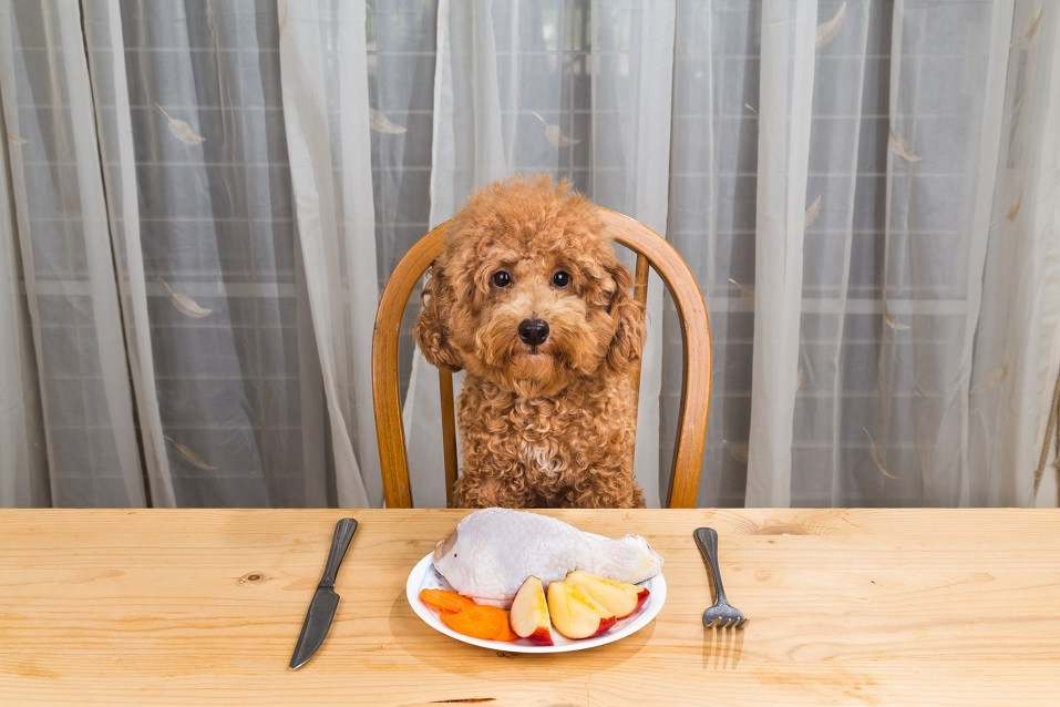 dog having delicious raw meat