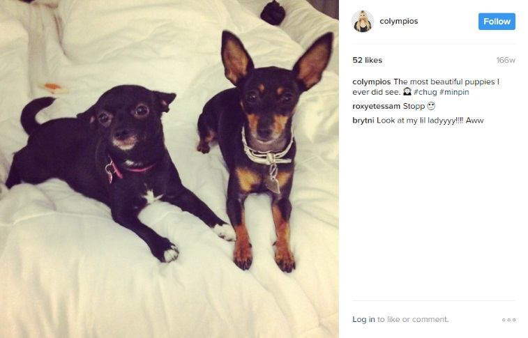 A photo of two dogs from Corinne Olympios' Instagram account
