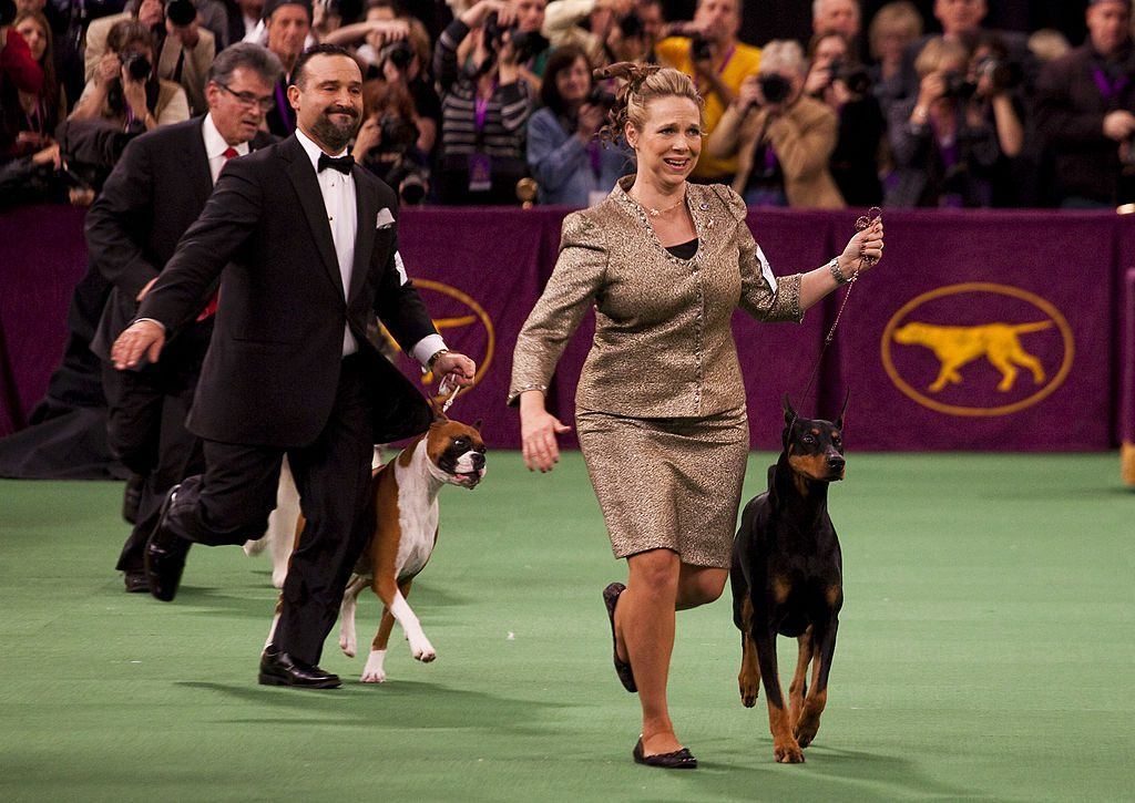 Doberman pinscher wins the working group in the 2012 Westminster Kennel Club Dog Show