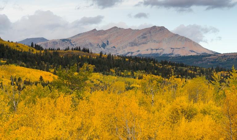 Fall colors saturate Glacier National Park