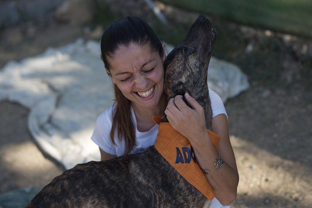Greyhound at Alhaurin de la Torre dog shelter