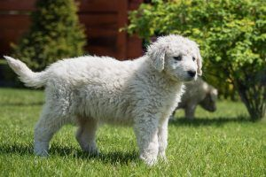 15 Things in Your Backyard That Are Hidden Dangers for Your Dog