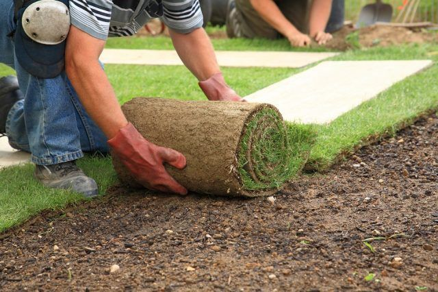 Man laying sod for new garden lawn