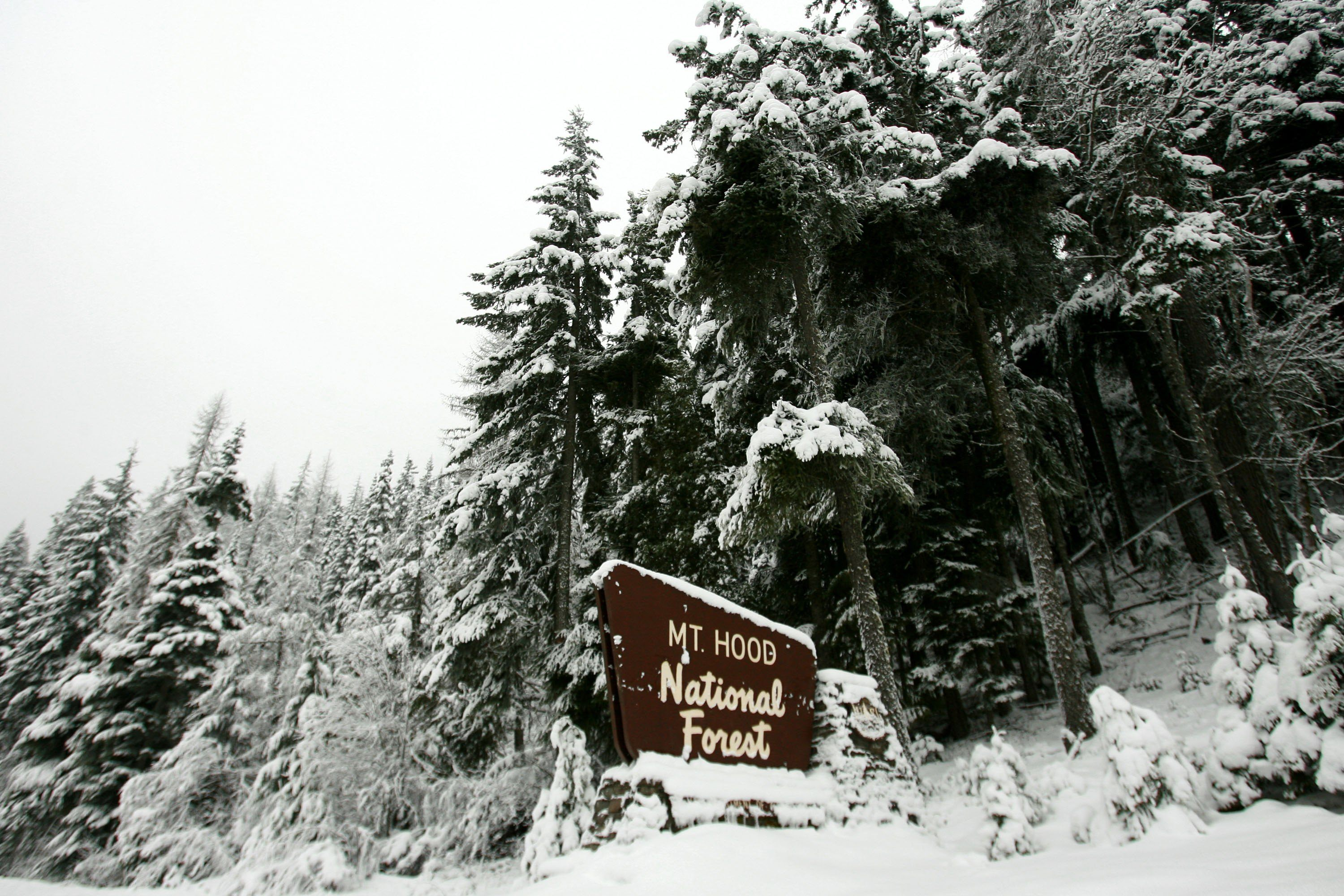 A sign for Mt. Hood National forest