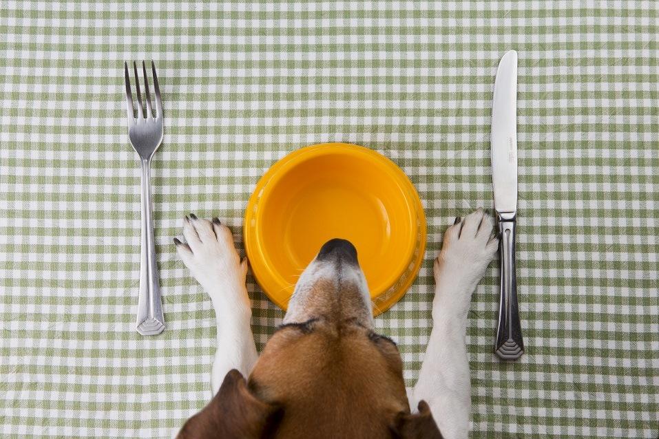 Can You Give Your Dog Mozzarella Cheese