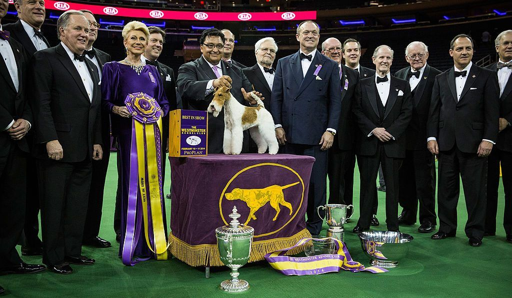Sky, a wire fox terrier, poses after winning the Best in Show category in the 2014 Westminster Dog Show