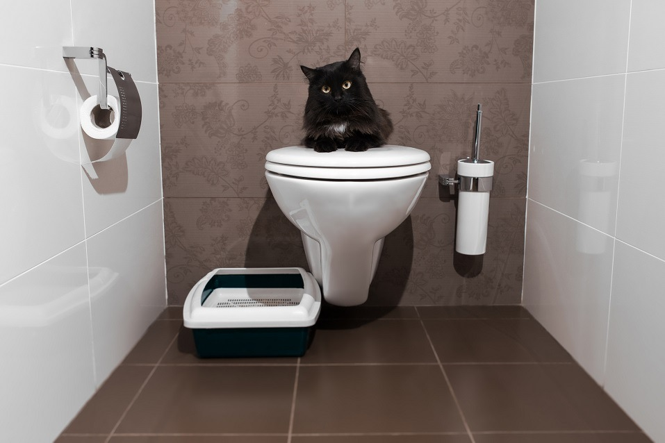 Black cat sitting on the human toilet
