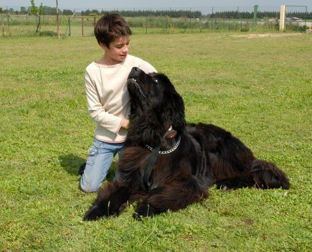 Girl and her Newfoundland dog