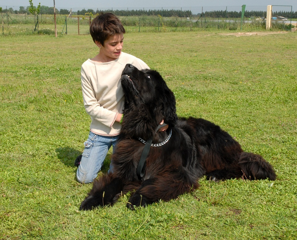A girl with her Newfoundland