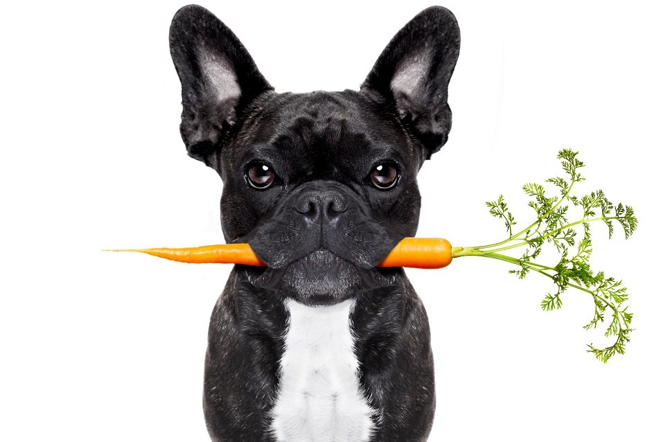 Healthy Foods Dogs Should Eat