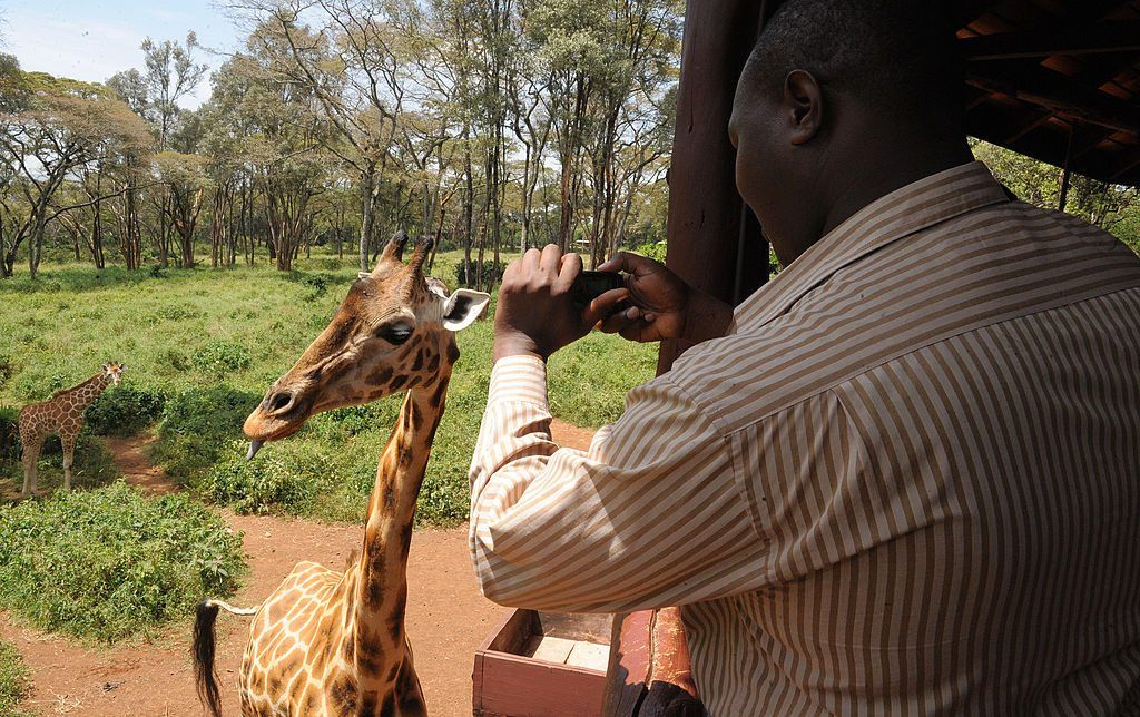 A Kenyan tourist takes a photo of a giraffe