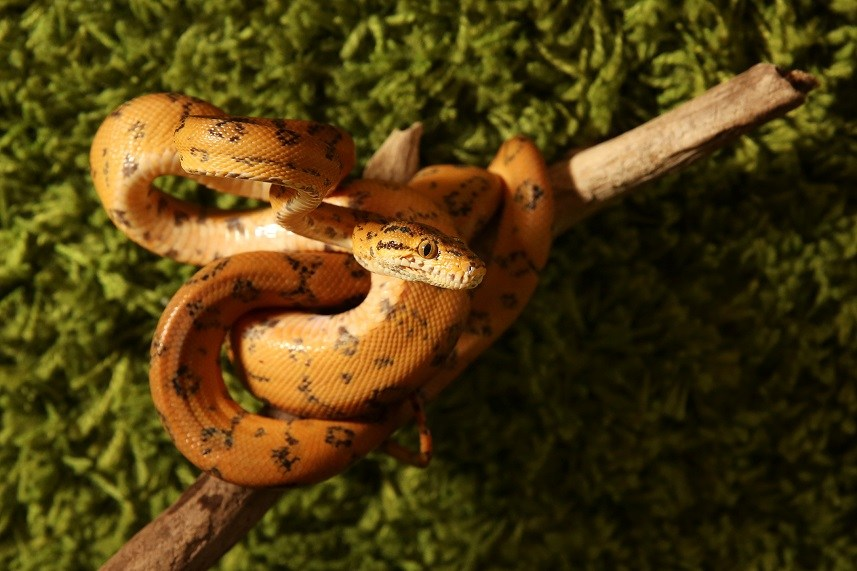 Snake coiled around a stick