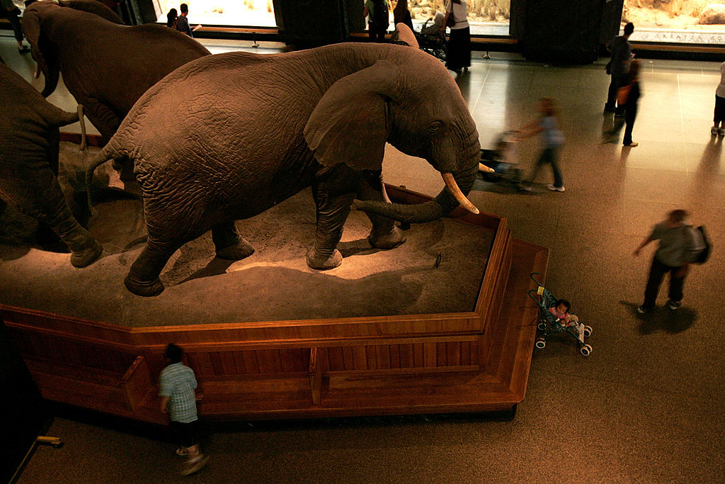 The entrance hall of American Museum